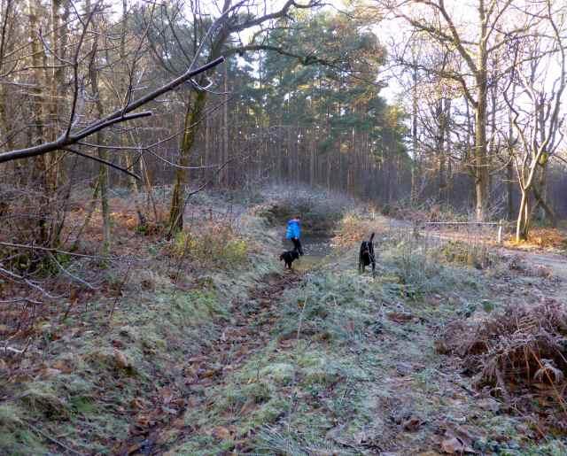 frosty walk 1
