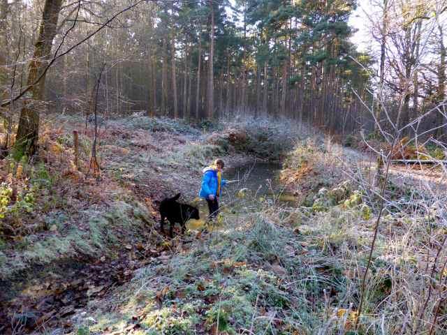 frosty walk 2