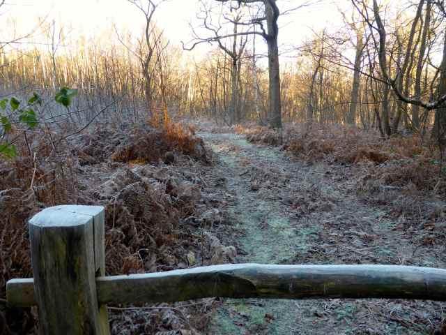 frosty walk 3
