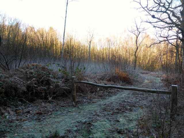 frosty walk 4