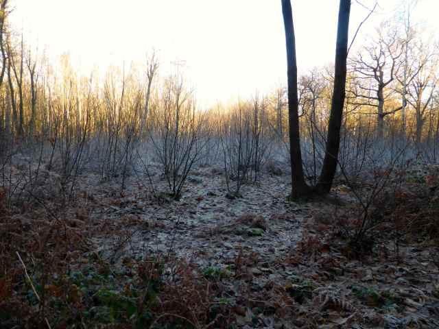 frosty walk 5