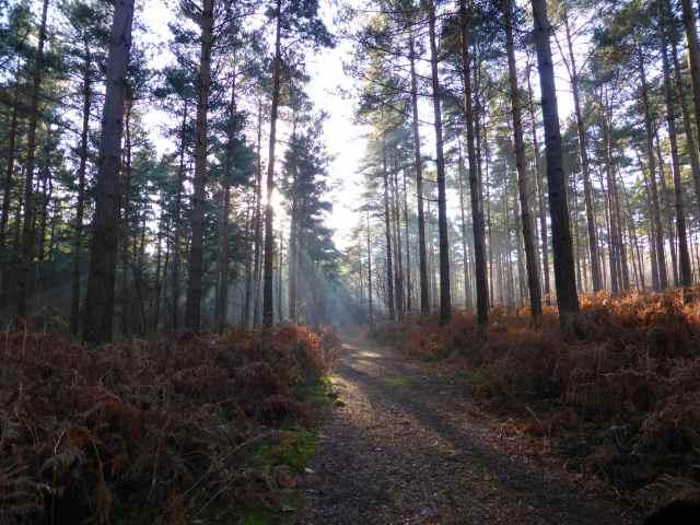 frosty walk 6