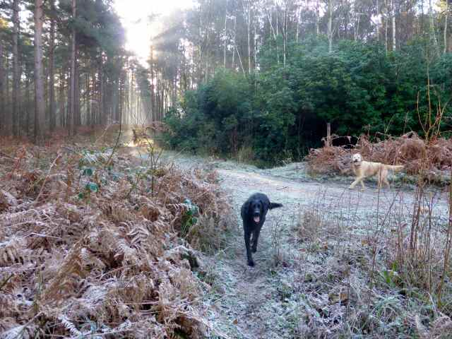 frosty walk 7