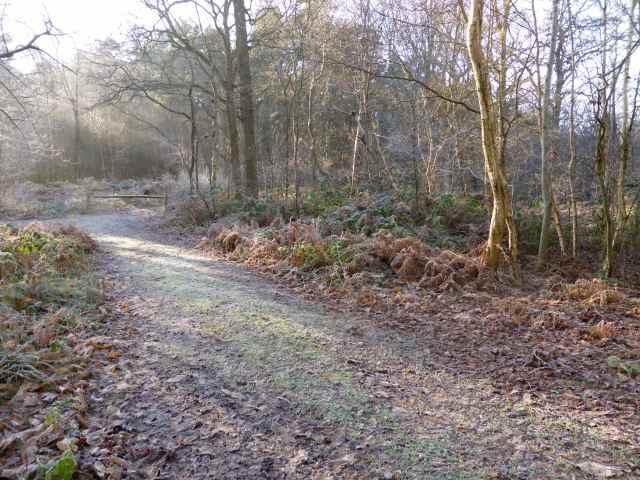 frosty walk 9