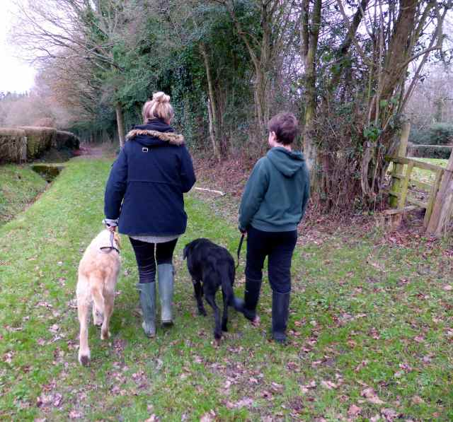 L and H on walk with dogs