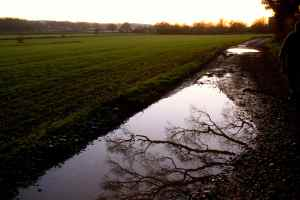 trees in puddle