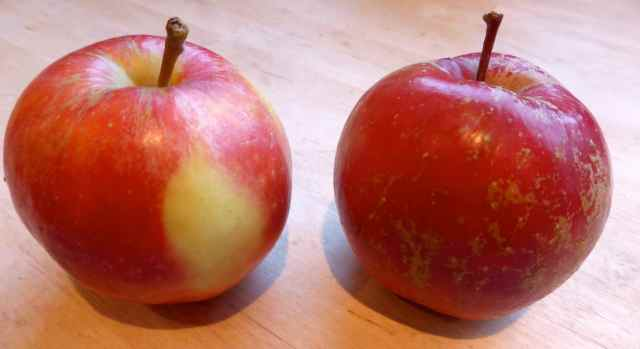 2 apples 23-1-15