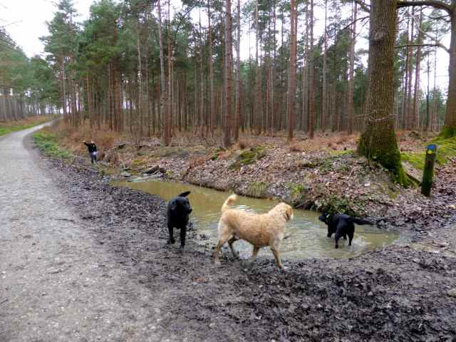 3 dogs and boy in water