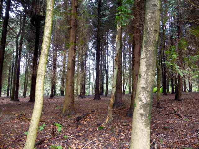 dark wood in Cranbrook