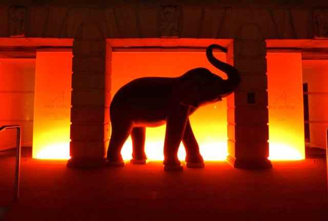 Apex elephant