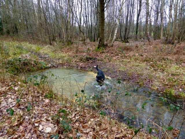 Milton in water 1