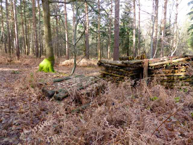 moss and wood stack