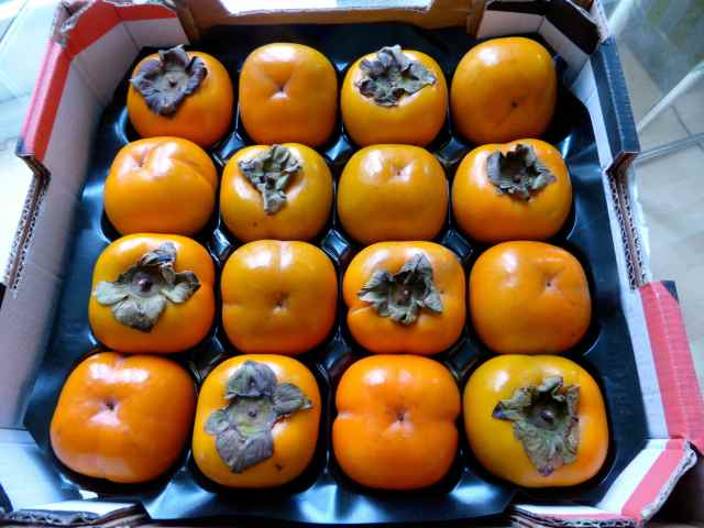 tray of persimmons