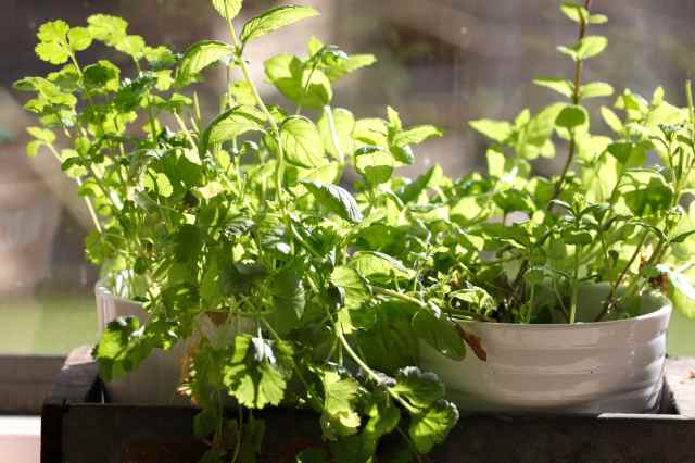 herbs in sunshine