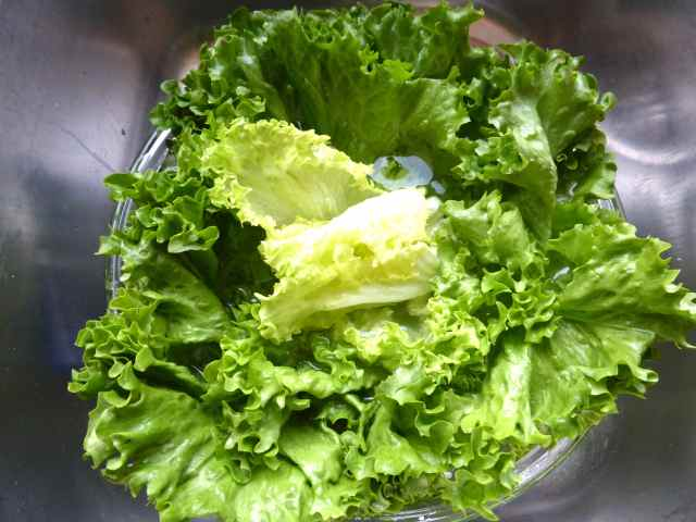 lettuce in sink