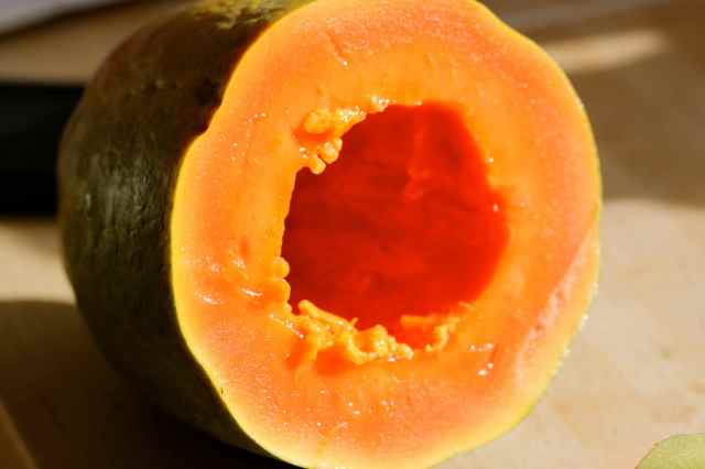 papaya 6-3-15