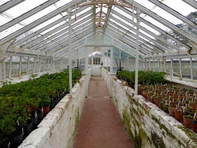 WN glasshouse