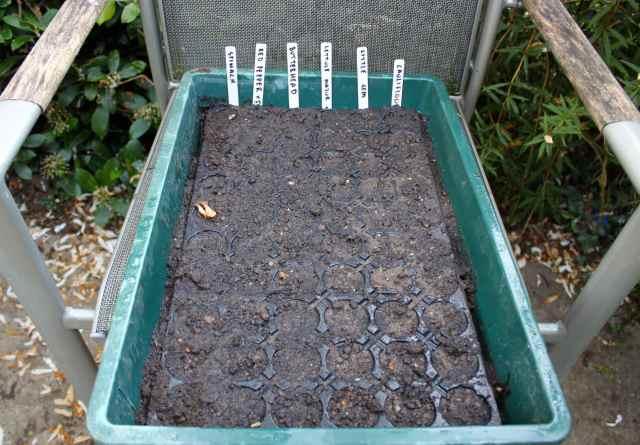 6 seeds sown