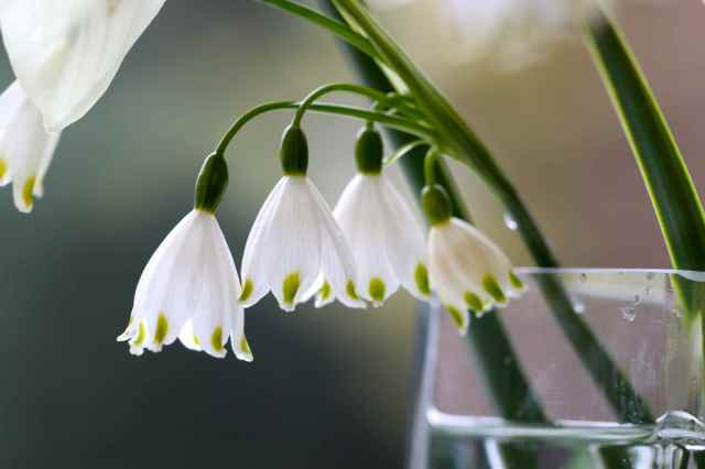 green and white flowers