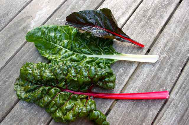 Swiss chard on table