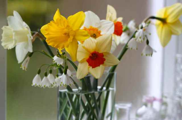 vase of daffs
