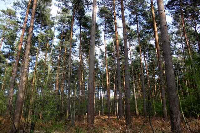 woods 28-4 2