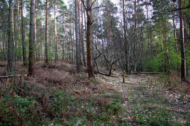 woods 28-4 3