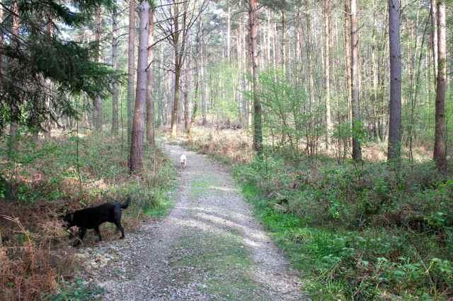 woods 28-4 4