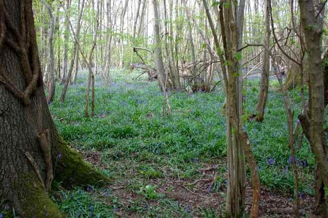 woods 28-4 6