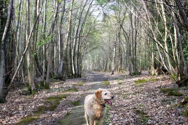 woods 28-4 7