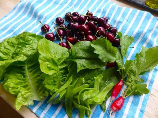 salad etc from garden