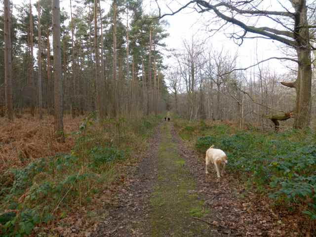 3 dogs in woods