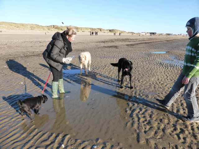 dogs at Camber