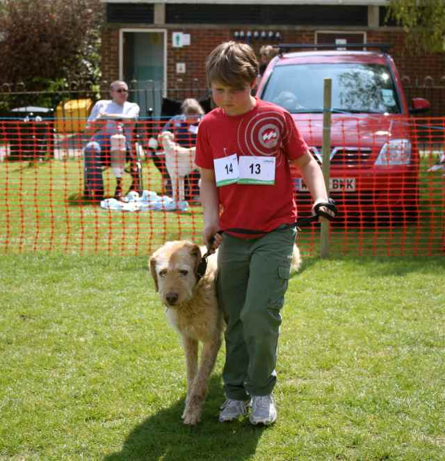 dylan at dog show