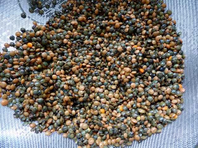 lentils in seive