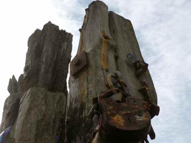 padlock on driftwood