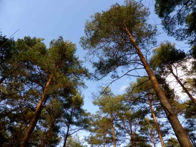 Woods EM 3