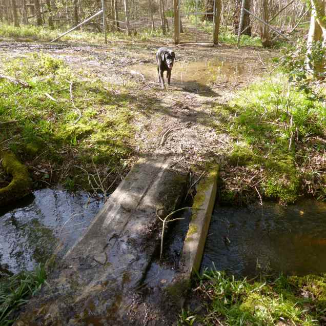 Woods EM 5